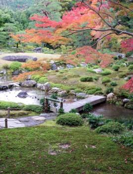Pin archives jardins japonais et niwaki for Pin jardin japonais
