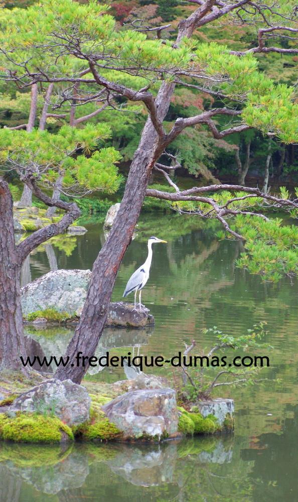metiers et reconversions professionnelles Nature - Hortithérapie - Niwatherapie© - Frederique Dumas www.frederique-dumas-landscape.com www.frederique-dumas.com