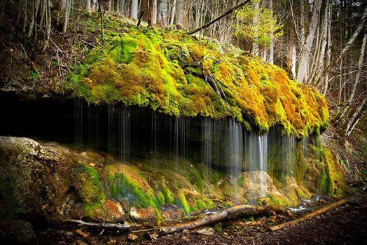 niwaki taille japonaise hortitherapie niwatherapie jardins japonais frederique dumas jardin shizen no sei nature