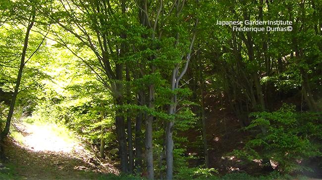 Forêt thérapie et shinrin yoku - Frederique Dumas www.japanese-garden-institute.com www.frederique-dumas.com