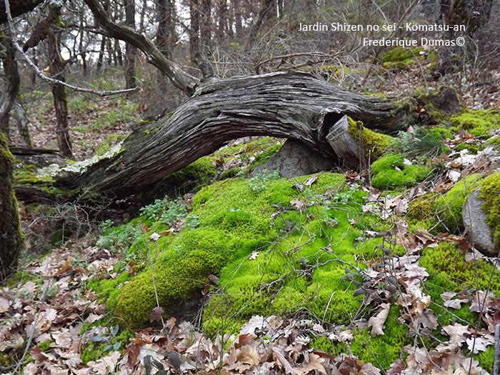 Bains de forêt à la japonaise - shinrin yoku - forêt-thérapie© Frederique Dumas www.japanese-garden-institute.com www.frederique-dumas.com