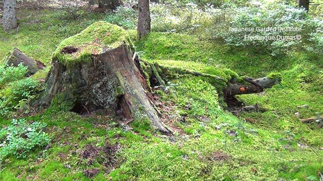 Forêt-thérapie© - Bains de forêt shinrin yoku et cancer - Frederique Dumas www.japanese-garden-institute.com www.frederique-dumas.com
