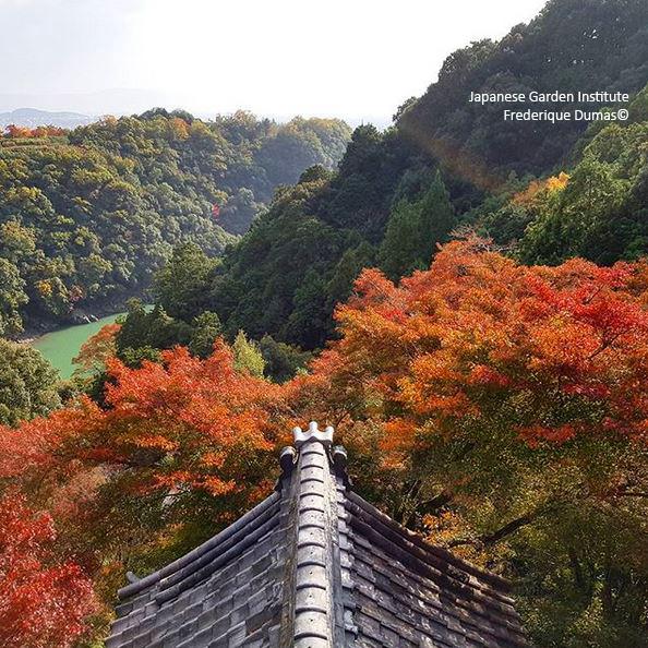 Forêt-thérapie© - Bains de forêt shinrin yoku au Japon - Frederique Dumas www.japanese-garden-institute.com www.frederique-dumas.com