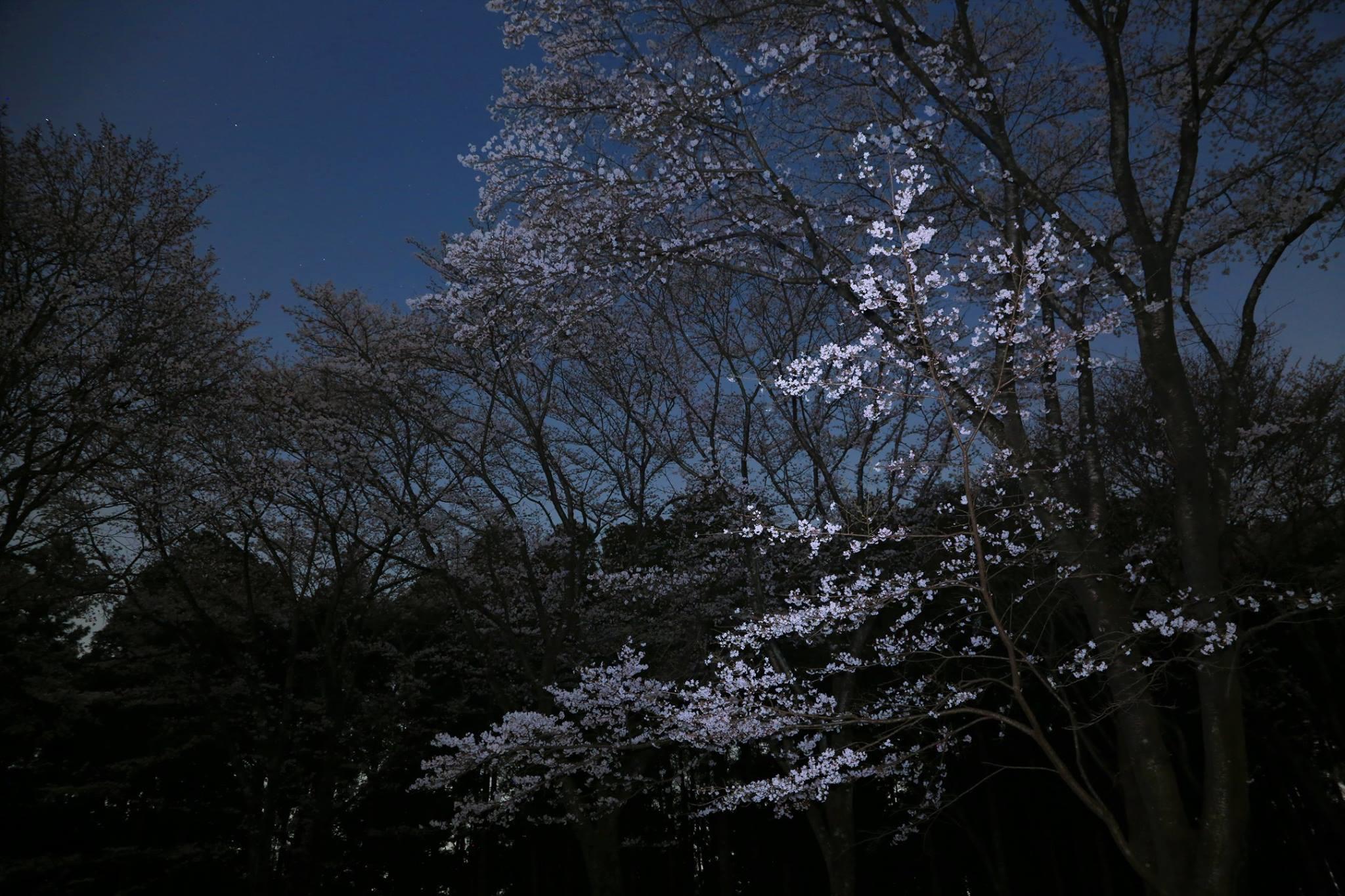 Jardins japonais thérapeutiques - Forêt-thérapie© - Shinrin yoku - Niwathérapie© - Frederique Dumas www.frederique-dumas-landscape.com www.frederique-dumas.com